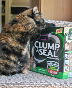 Get a Happier Home with ARM & HAMMER™ Clump & Seal™ MicroGuard™ Cat Litter! Experience the confidence of 7-day odor control—guaranteed thanks to the heavy-duty odor eliminators plus ARM & HAMMER™ Baking Soda that destroy immediate odors on contact. | beckysbestbites.com #clumpandseal #ad #sk